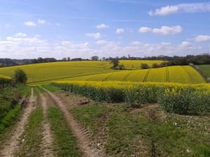 2014-04-09 Hockeridge - View from top of hill across fields